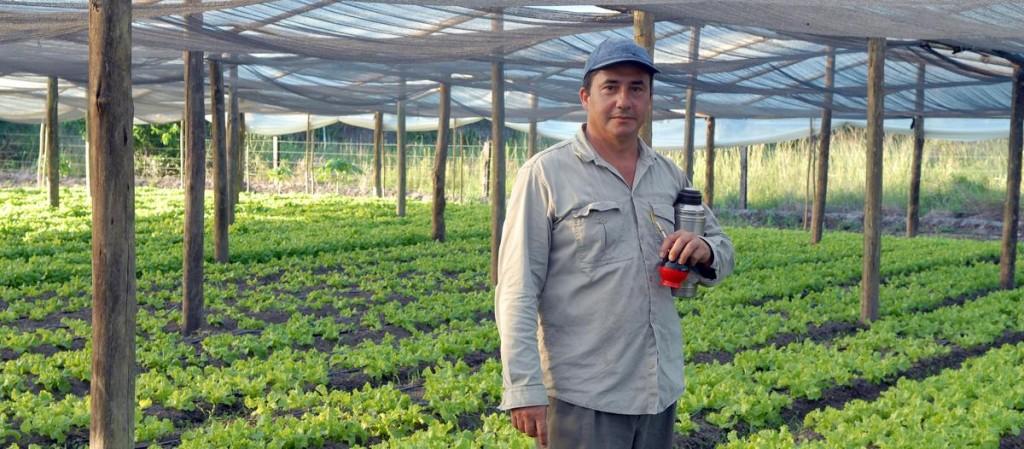 i4121-productor-verduras-corrientes-4