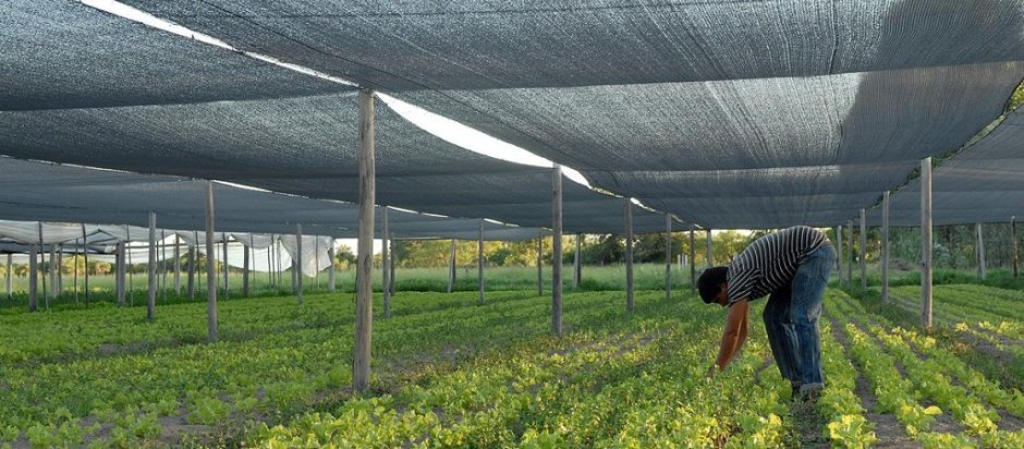 i4122-productor-verduras-corrientes-5