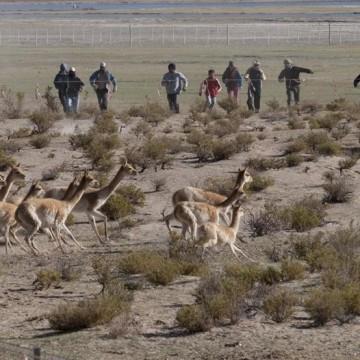 vicuñas, Catamarca, ecología
