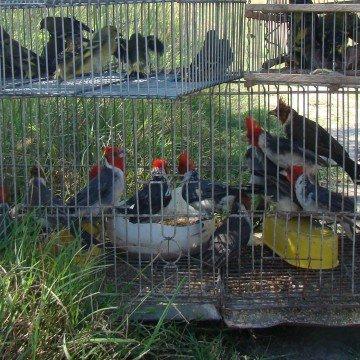 aves, tráfico, Córdoba, ecología