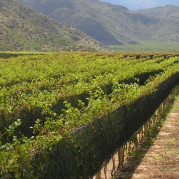 La Rioja, uvas, vinos, evilar 2015, cata