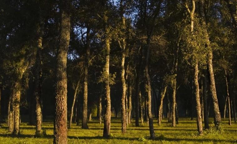Parque nacional Chaco, reserva natural, quebracho, aves