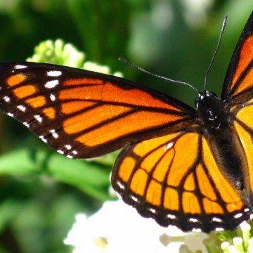 insectos, tráfico, fauna, Misiones