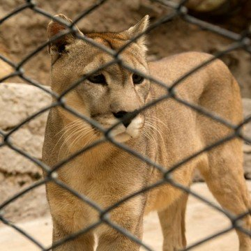 zoológicos, ecología, animales