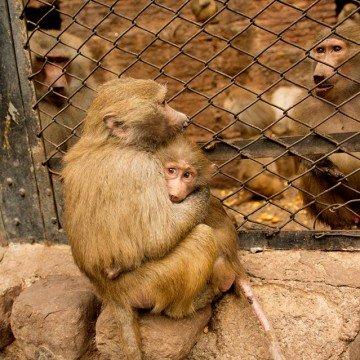 Día del Animal , primates, ecología, animales
