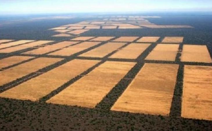 Chaco, deforestación, árboles