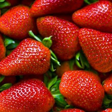 frutillas, frutas, agroecología, INTA