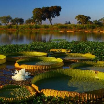 agua, humedales, ecología, inundaciones