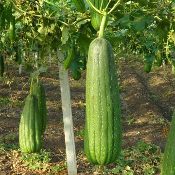 esponja vegetal, natural, salud