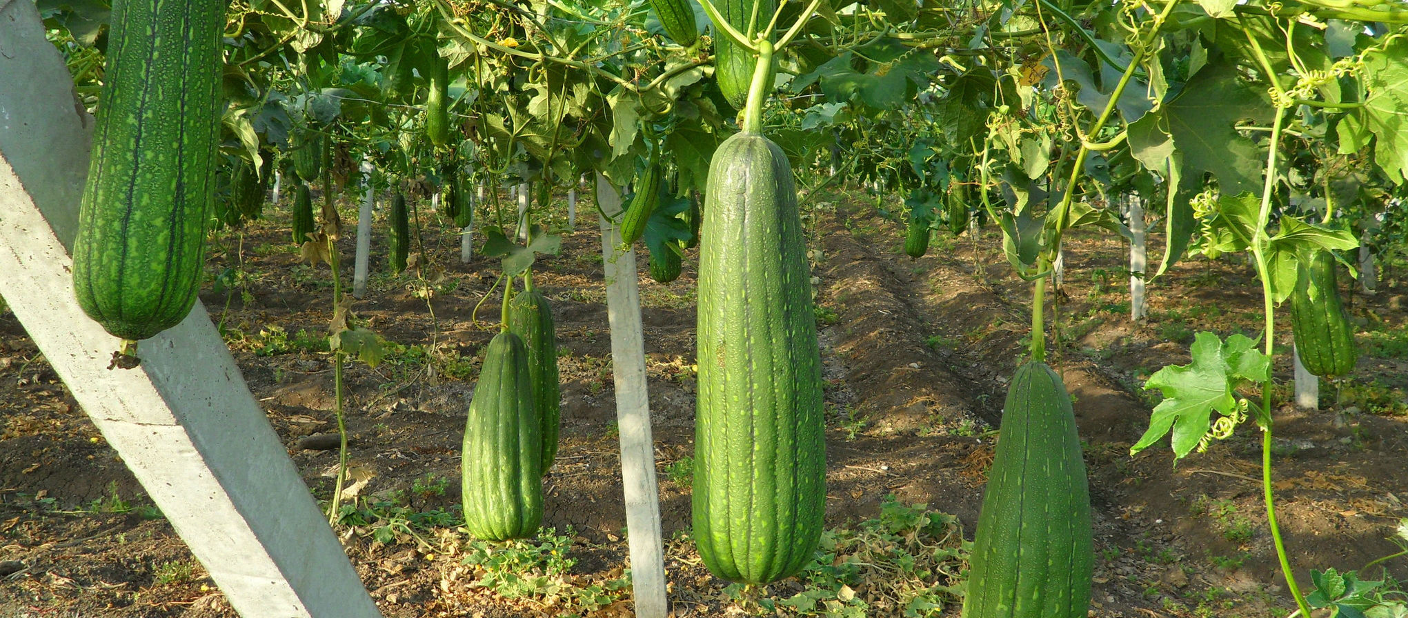 Esponja Vegetal Cuáles Son Sus Secretos