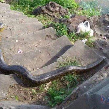 Inundación inundados Corrientes
