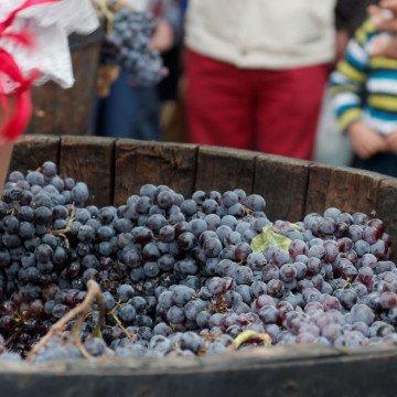 vendimia uva pisada fiesta vino