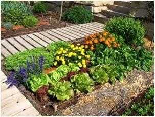 plantas, agricultura, Misiones