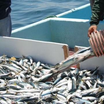 pesca ilegal, peces, ecologia