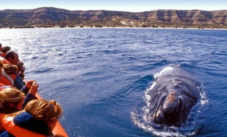 ballena, Parques Nacionales, televisión