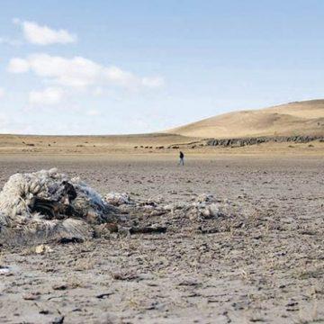sequía, Patagonia, producción