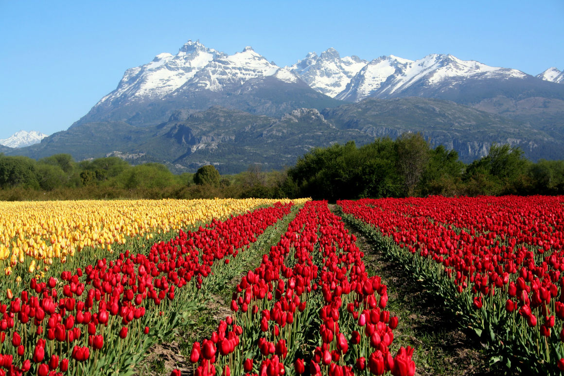 tulipanes, Chubut, Esquel, turismo