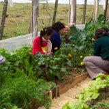 escuelas, ecología, educación