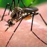 salud, mosquitos, ecología
