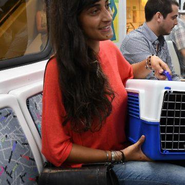 perros, gatos, subte, Buenos Aires