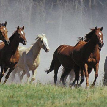 equino, caballos, cambio climático