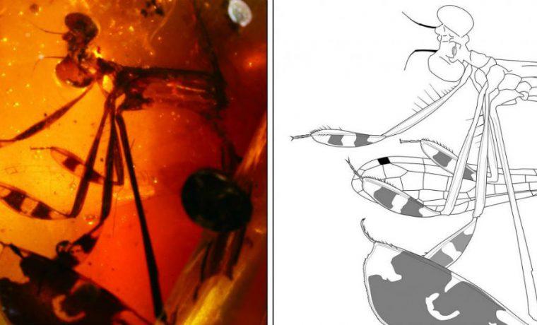 insectos, ciencia, descubrimiento