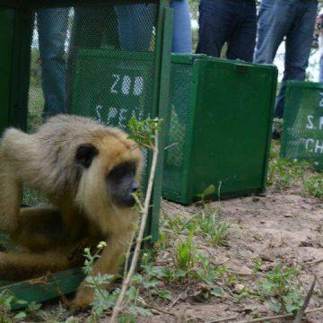 Chaco, liberación, animales, fauna, ecología