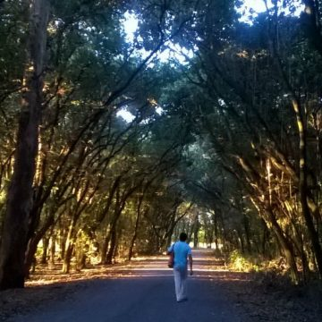 bosques, árbol, Parque Nacional, ecología