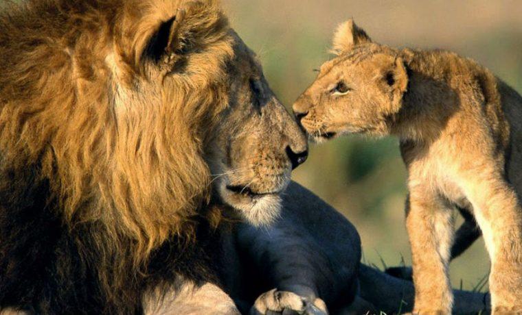 animales, fauna, silvestre, ecología
