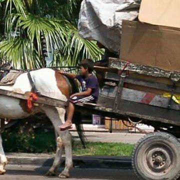 caballos, animales, ecología