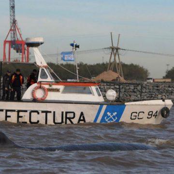 ballena, fauna, ecología