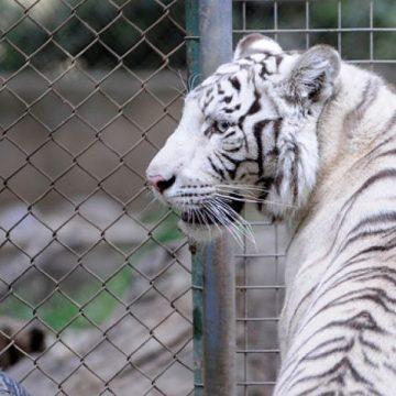 zoológico, animales, SinZoo