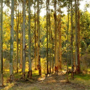 Capilla del Monte, ecología, árboles