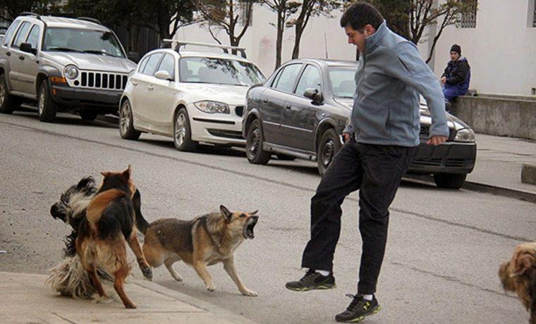 perros salvajes, Ushuaia, salud