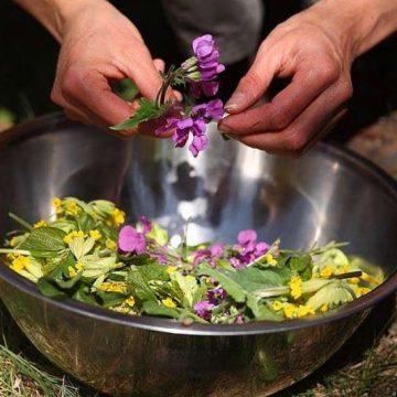 mapuches, salud, medicina, cultura