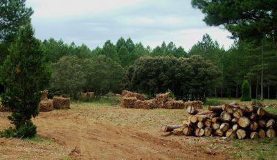 Que-es-la-biomasa-forestal