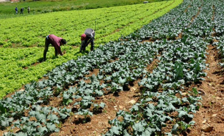 INTA, producción, ecología, concurso, alimentos