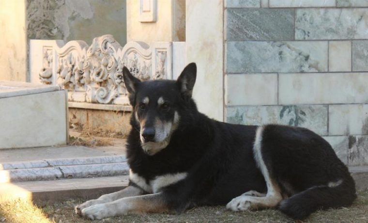 Capitán, perro, Villa Carlos Paz, Córdoba
