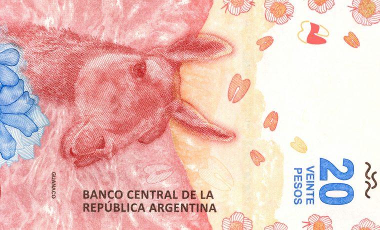 billete, guanaco, cultura