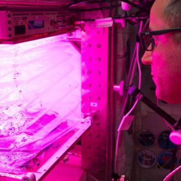 NASA, astronautas, huerta, ecología
