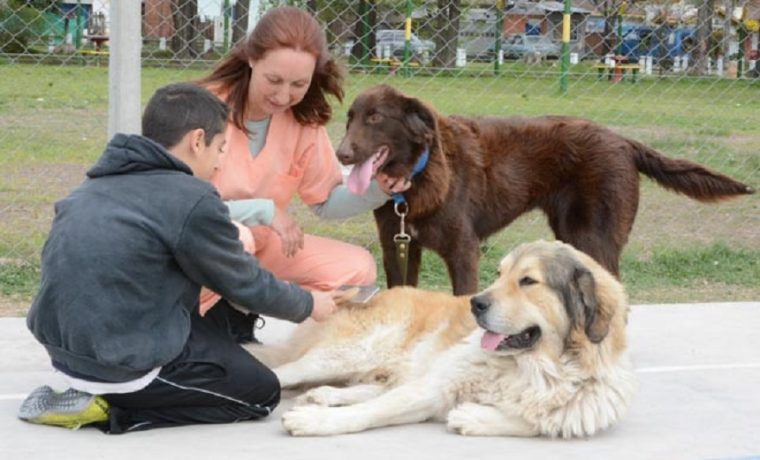 zooterapia, animales, salud, autismo