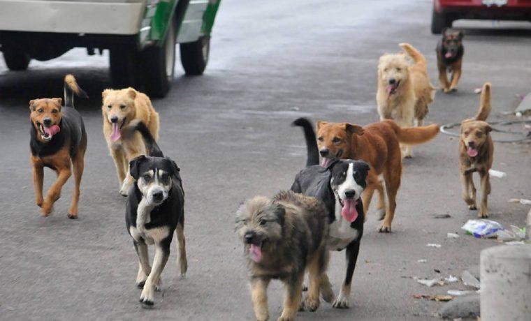 perros, salud, calle