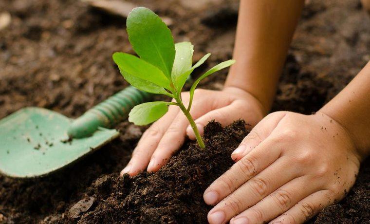 R o cuarto los vecinos deber n plantar un rbol frente a for Arboles para plantar en invierno