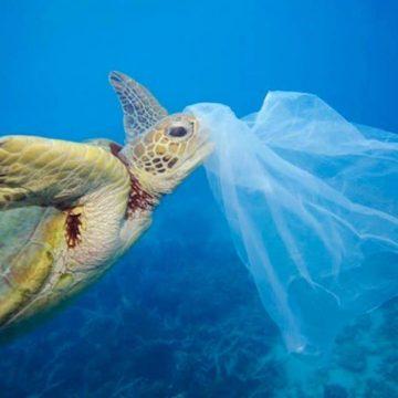 plástico, basura, fauna marina, contaminación