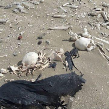 Península Valdéz, Chubut, esqueletos