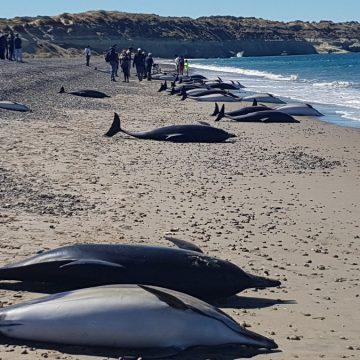 delfines, Chubut, Puerto Madryn, ecología