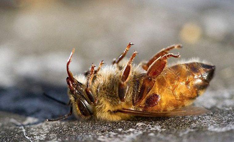 abejas, apicultor, Córdoba, Traslasierra