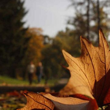 otoño, calor, clima, pronóstico