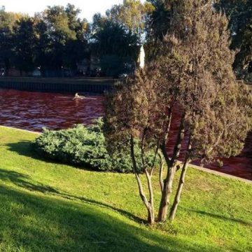 Delta, agua, contaminación, Tigre