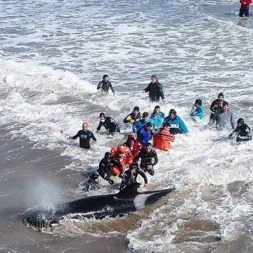 orcas, Costa Atlántica, ecología
